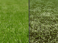 Artificial grass, pros and cons