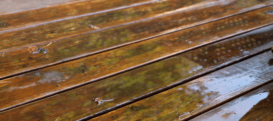 Wooden decking covered in algae, making it slippery