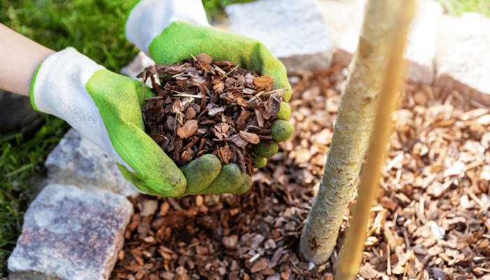 Bark chippings on planting bed to protect from weds and make it lower maintenance.