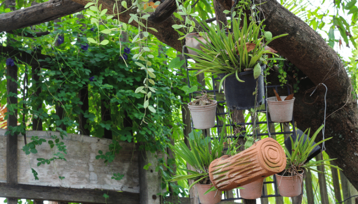 Hanging plants and creepers making use of vertical space