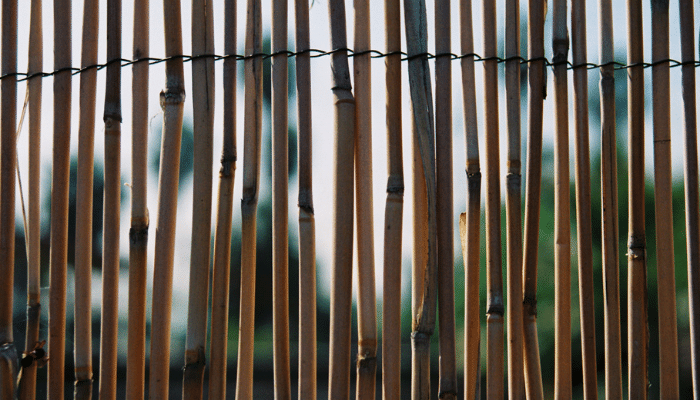 Bamboo fencing or screening