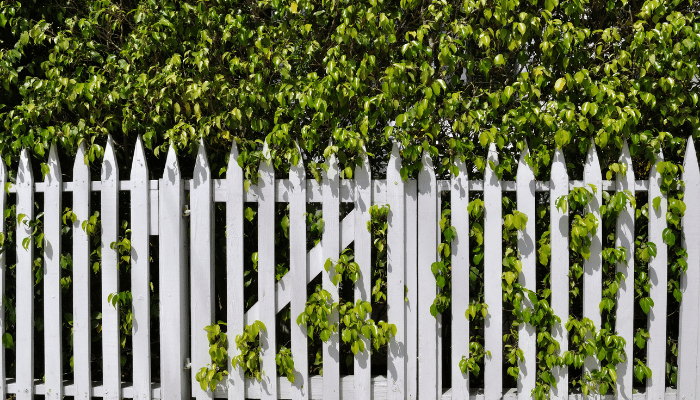 Hedges need trimming and fences need staining. Unless you go for a composite fence there is maintenance involved with either choice.