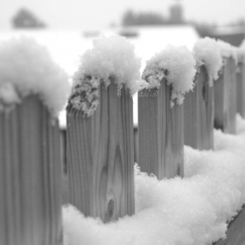Fence in the snow