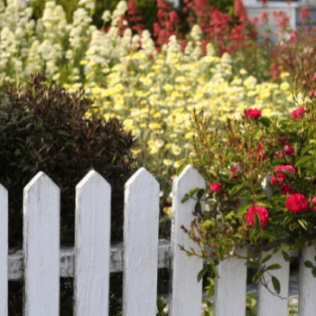 White picket fence in the front garden